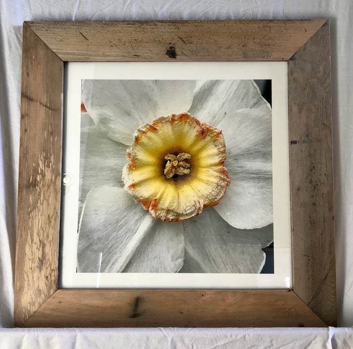 Framable Flowers - Framed! A Local and Sustainable Art Venture