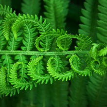 Ferns Magnet Set