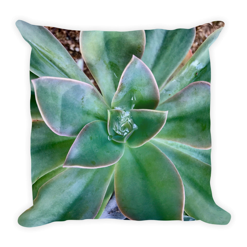 Desert Delight Succulent Pillow