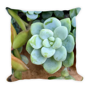 Succulent Green Premium Pillow
