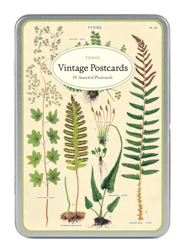 Cavallini - Carte Postale - Ferns - Tin of 18 Postcards - 9 Designs/2 Per Design