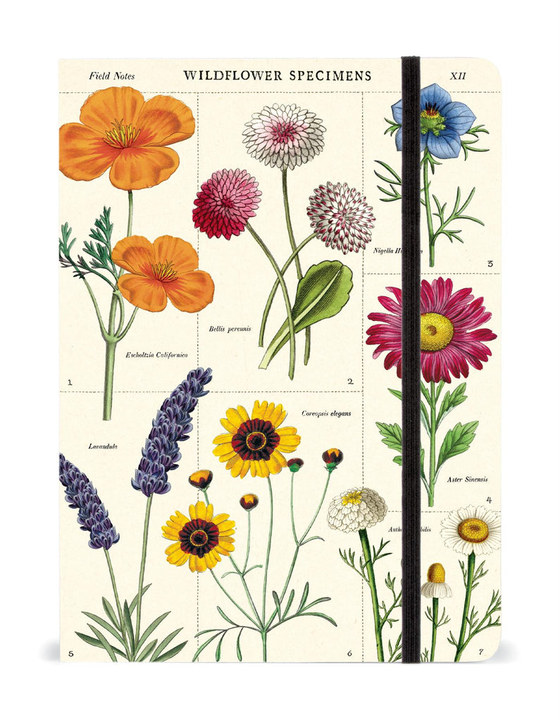 Cavallini - Large Lined Notebook 6x8ins - Wildflower Specimens - 144 Pages With Elastic Enclosure