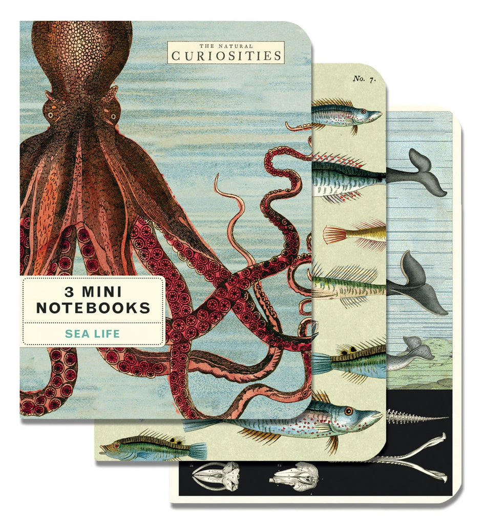 Cavallini - Set of 3 Mini Notebooks - Sea Life - Lined, Blank & Graph Interiors