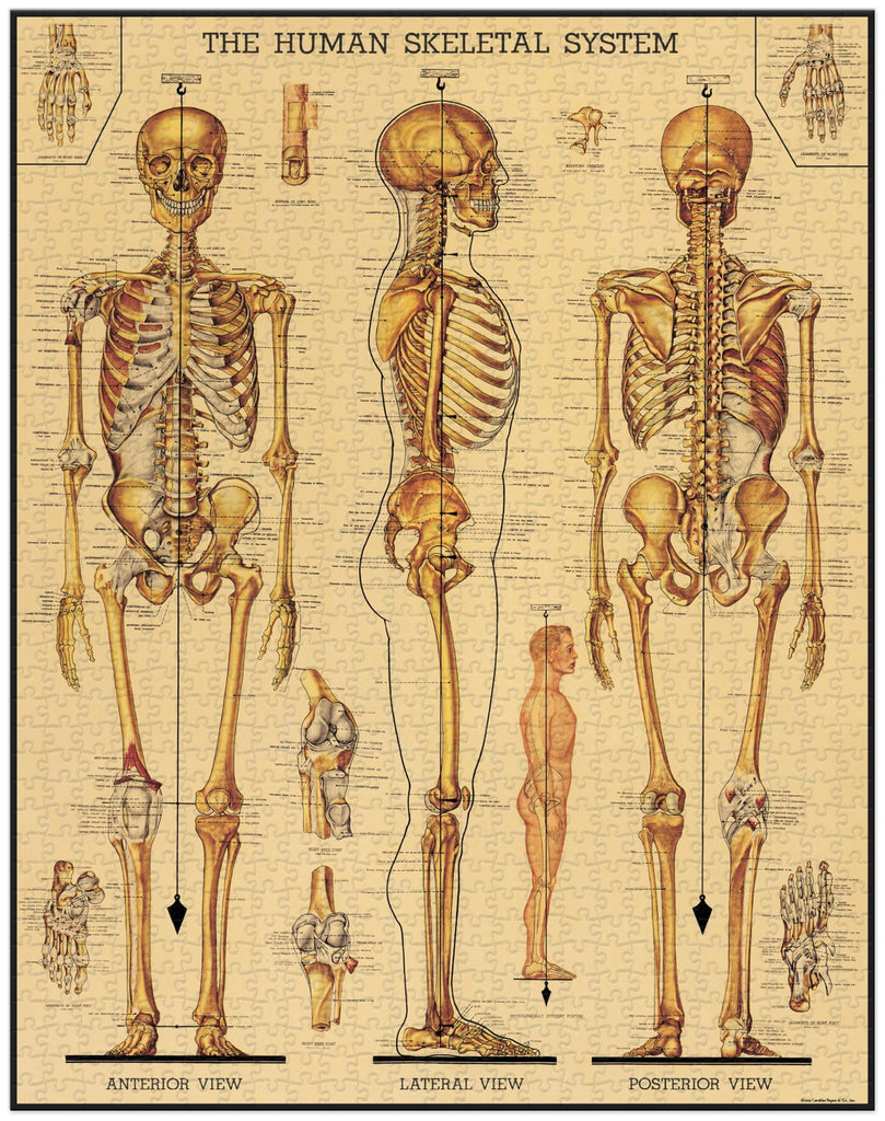 Cavallini - Vintage Jigsaw Puzzle - 1000 Pieces - 55x70cms - Human Skeletal System