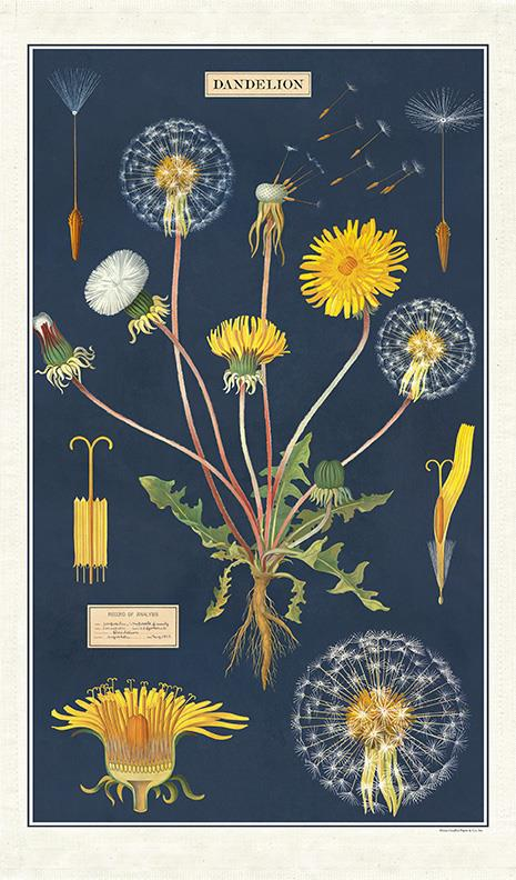 Cavallini - 100% Natural Cotton Vintage Tea Towel - 80 x 47cms - Dandelions