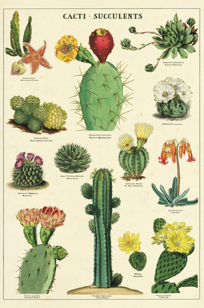 Cavallini - Carte Postale - Cacti/Succulents- Tin of 18 Vintage Postcards - 9 Designs/2 Per Design