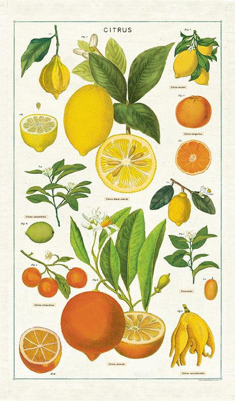 Cavallini - 100% Natural Cotton Vintage Tea Towel - 80 x 47cms - Citrus Fruits