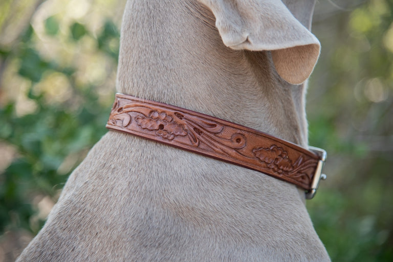close up of dog wearing tan leather collar