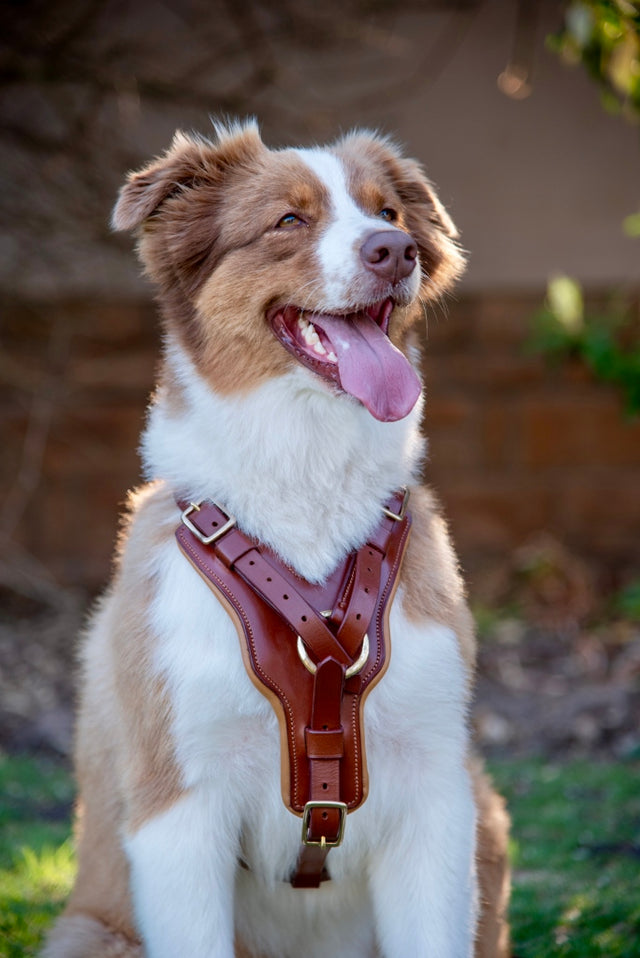 ST-DGH/002 Tan Leather Dog Harness