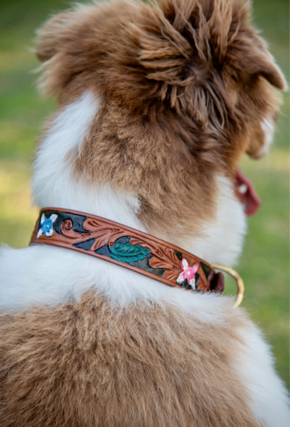 tan leather dog collar on a dog