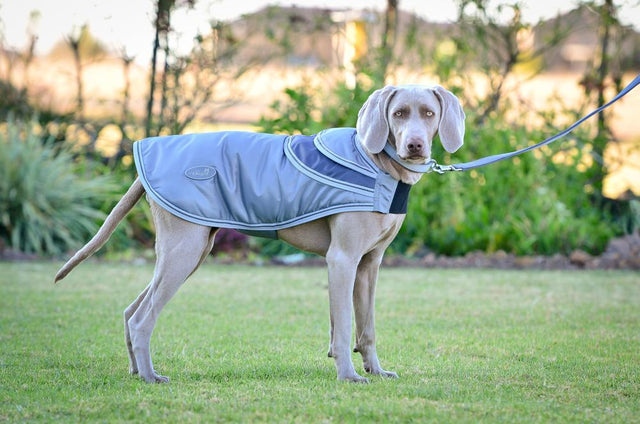 ST-DCT1/003 Silver & Grey Dog Jacket