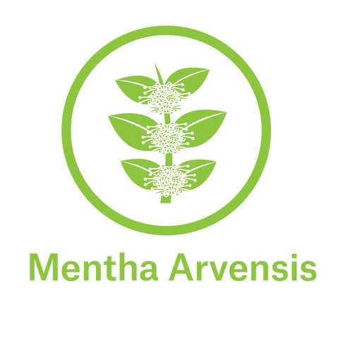 Essential Oil - Mentha Arvensis