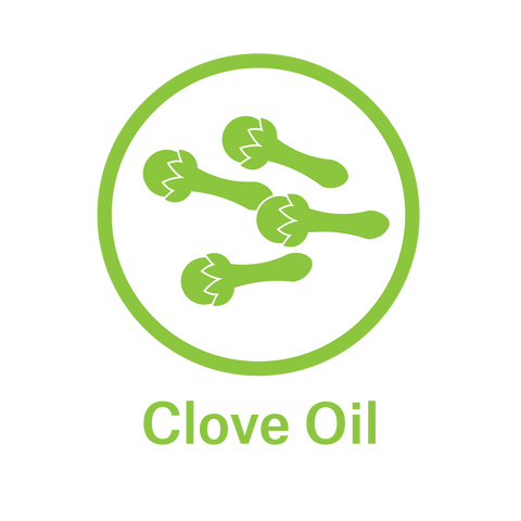 Essential Oil - Clove Oil