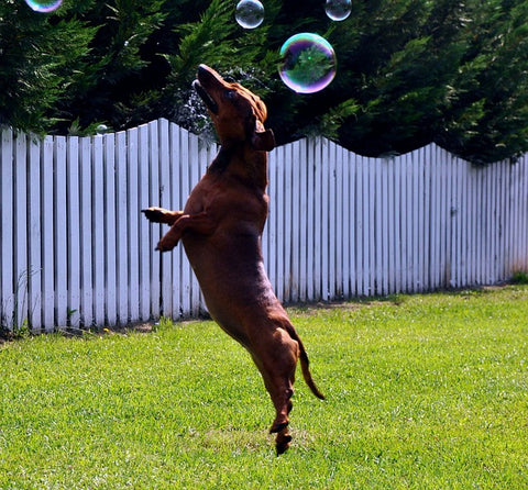 dog jumping to pop bubbles