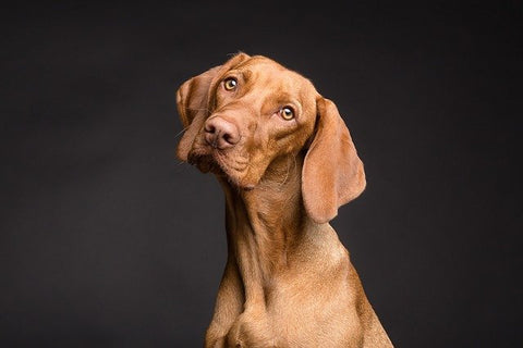 Dog with a questioning look
