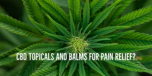 CBD Balms for pain relief. Do Cbd Balms relieve pain?
