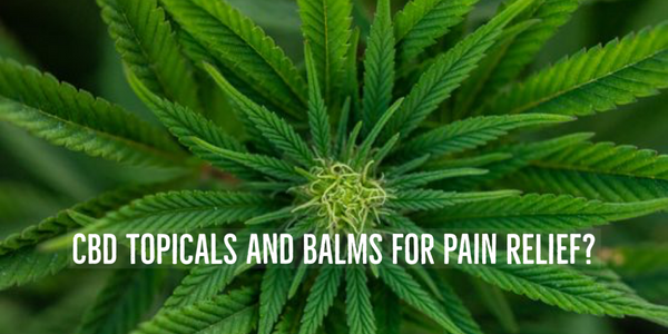 CBD Balms for pain relief. Are CBD balms the solution for topical pain relief?