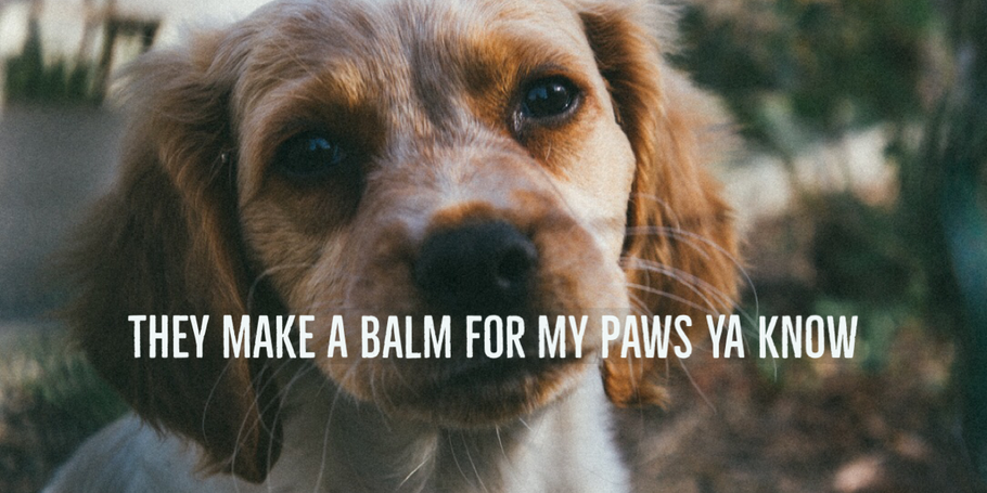 CBD balm for dogs paws