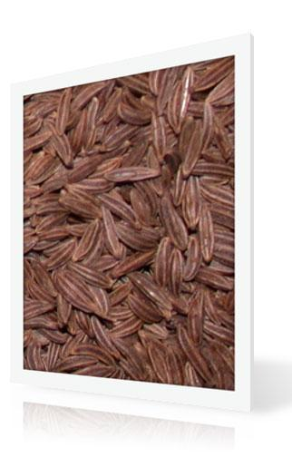 American Caraway Seed