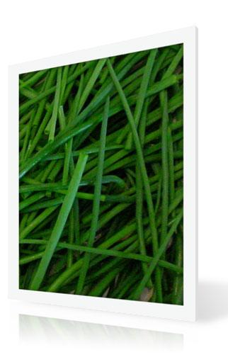 American Chives Leaves