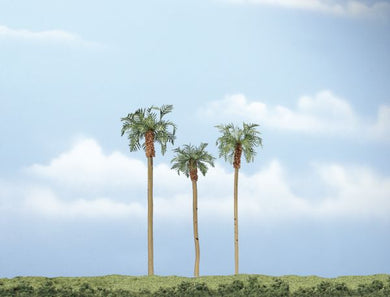 "3-4 1/2"" Premium Trees Royal Palm Tree"