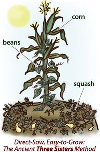Three sisters (corn beans and squash) - Radical Roots Seed Bomb Company