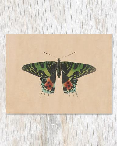 Specimen D Moth Illustration