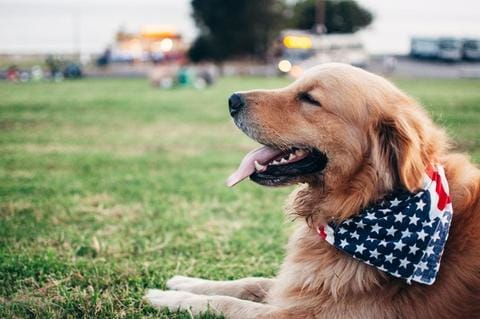 Fireworks Safety Tips- Pet Safety
