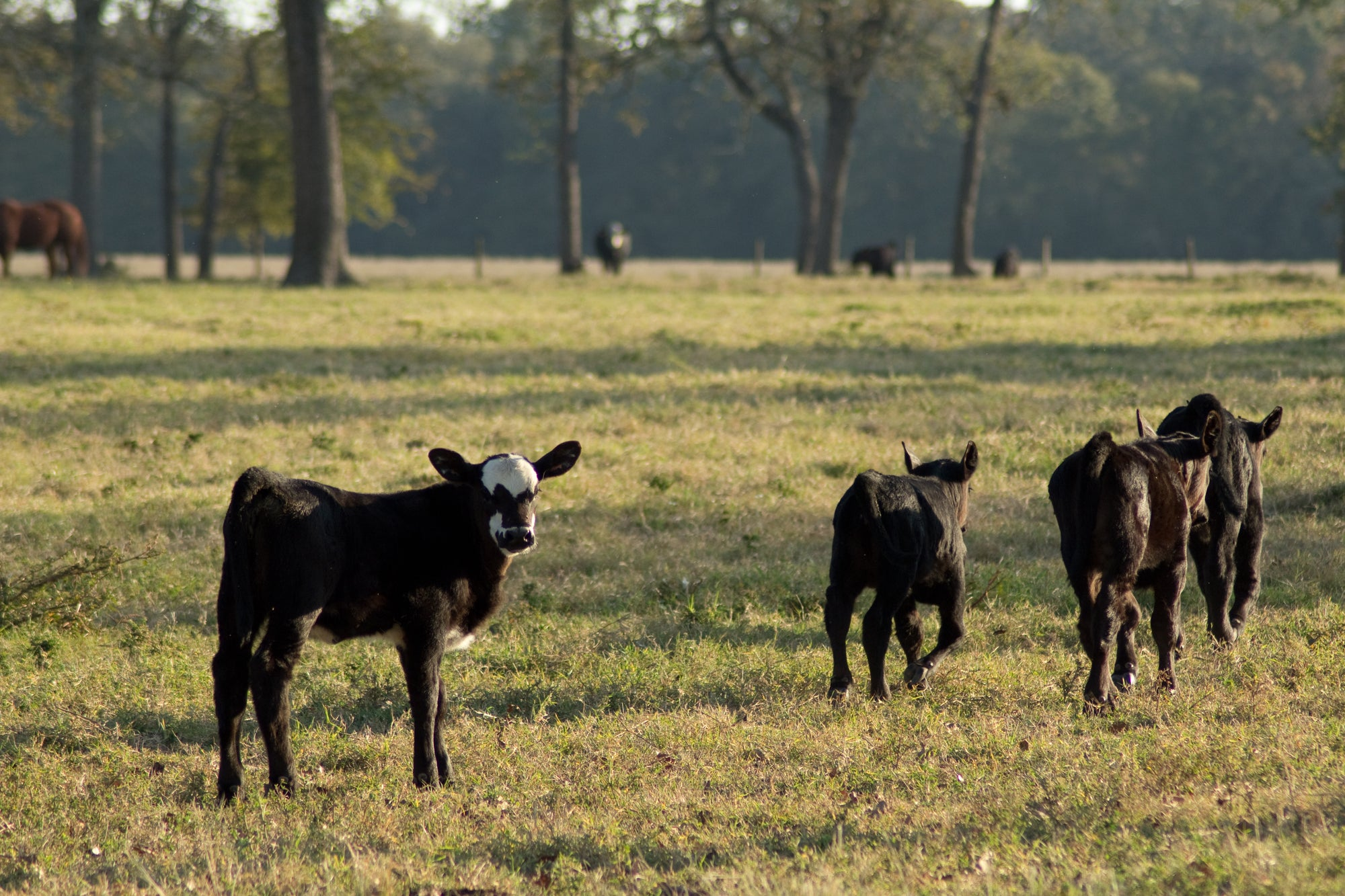 The Economics of Eating Beef from a Small Local Farm