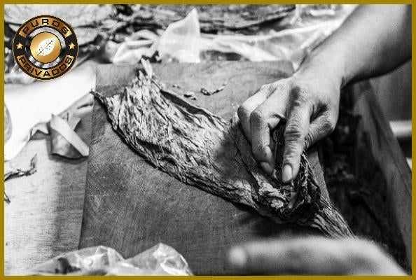 Cigar Making Craftsmanship