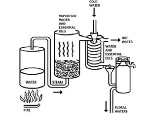 Real Frankincense Chemical Free Distillation Process
