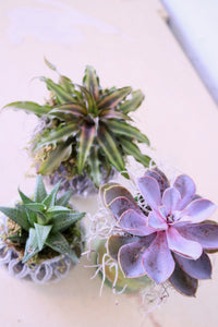 Pi Beta Phi - Mom's Day Succulent Workshop