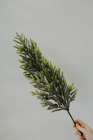 Mountain Pine Pick