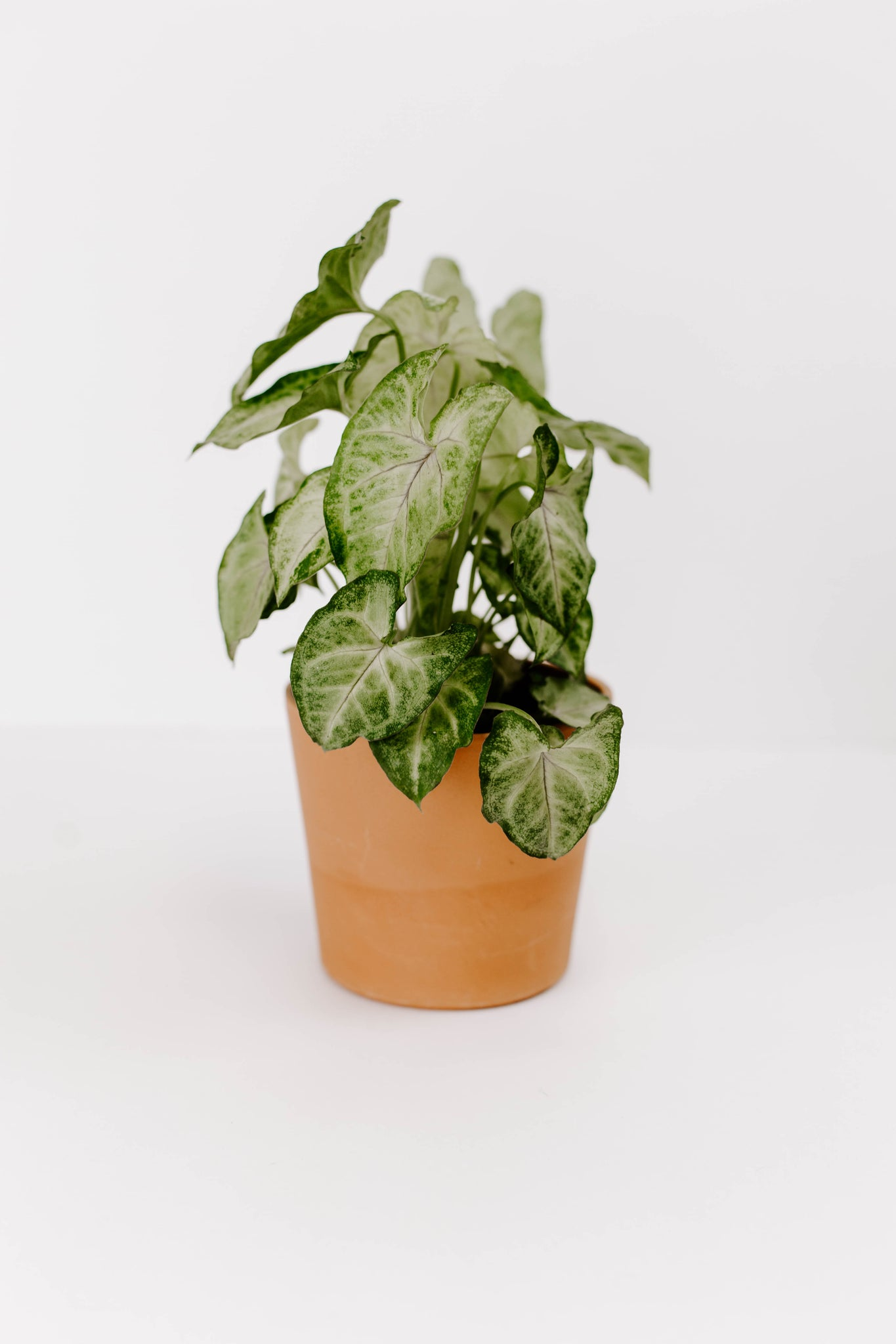 "4"" GREEN PLANT 
