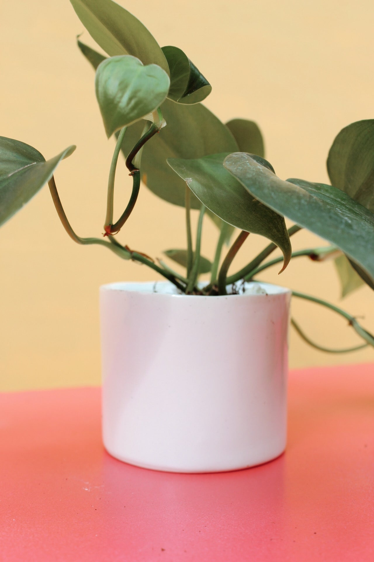 "2"" GREEN PLANT  