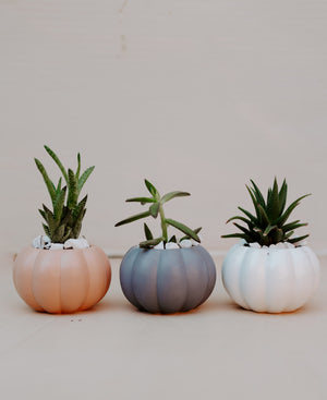 Pumpkin Planter With Succulent
