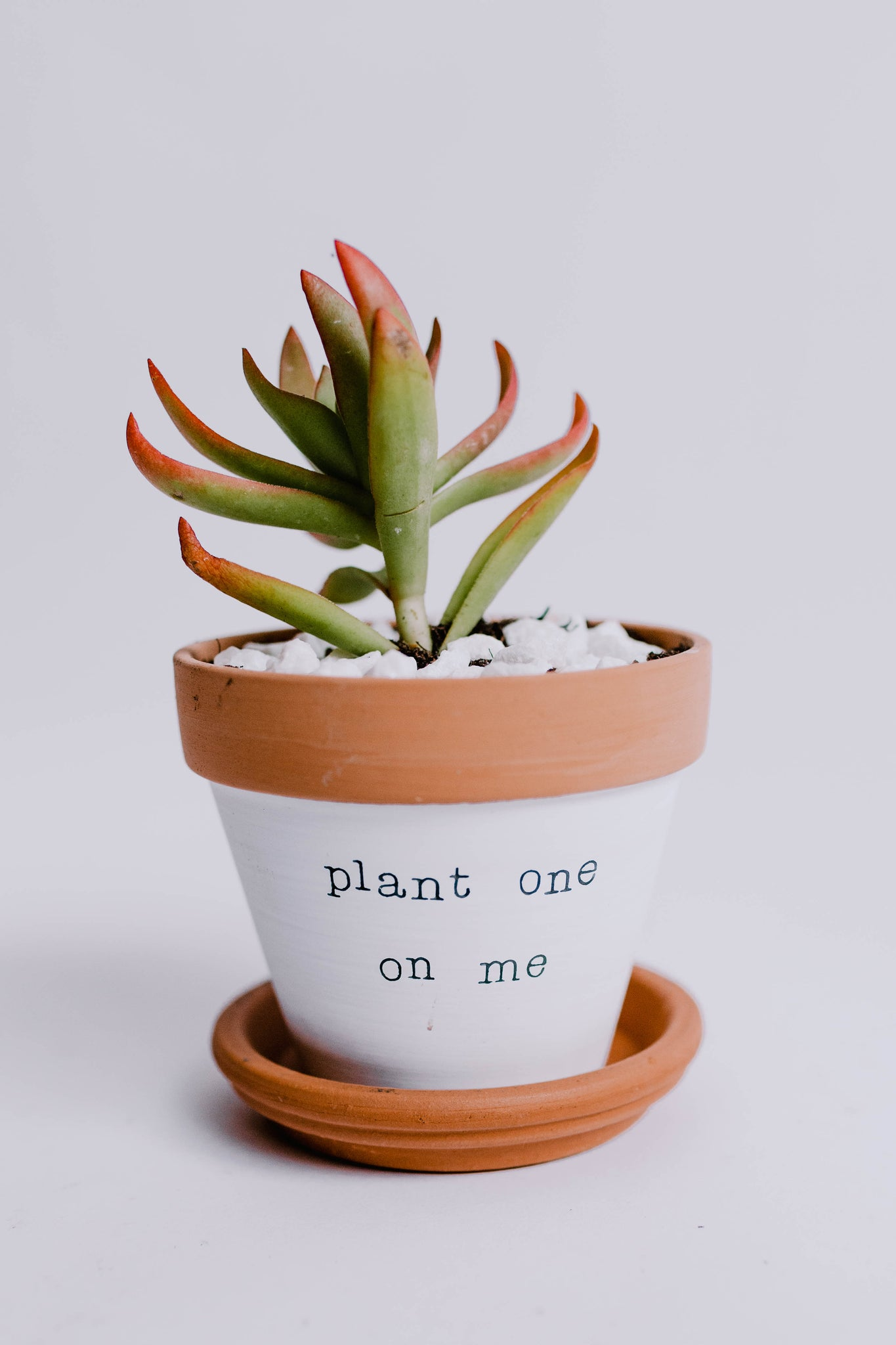 Plant One On Me Pot