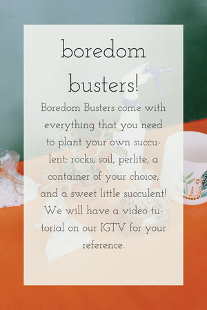 Boredom Busters: Frogs, Snails + Puppy Dog Tails!