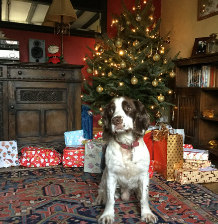 Happy, healthy Christmas with your dog