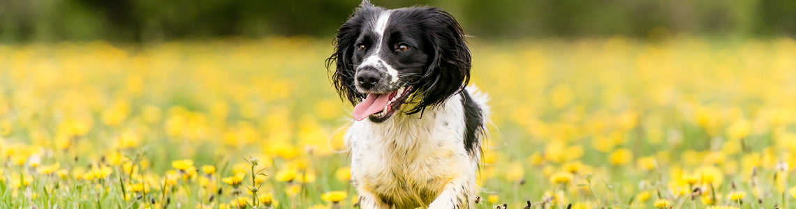healthy paws balanced diet for dogs