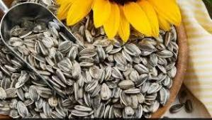 In-Shell Sunflower Seeds 1 lb