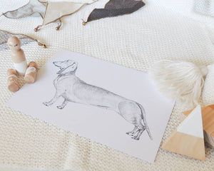 Dachshund in White