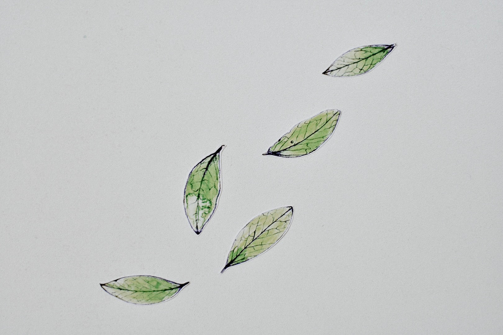 Blueberry Leaves Fabric Wall Decals - Separates