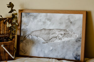 Moby Dick Whale Illustration