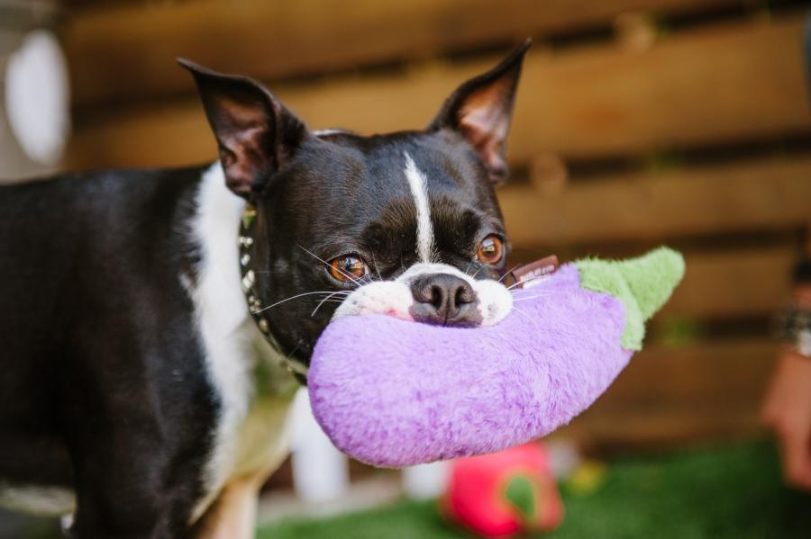 Aubergine Plush Dog Toy