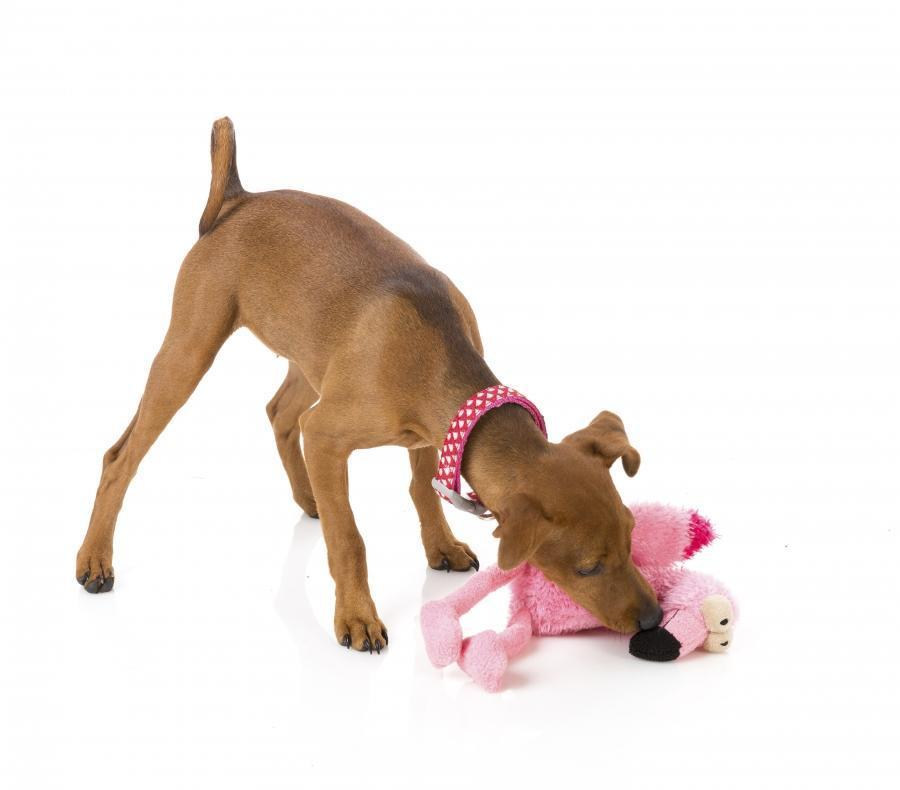 Flo The Flamingo Plush Dog Toy