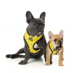 Monkey Mania Dog Harness