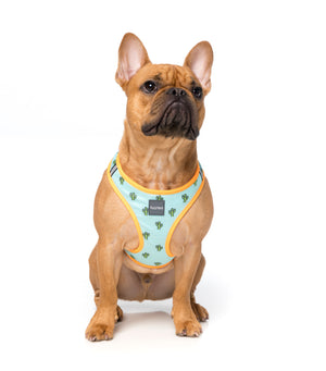 Tucson Step In Dog Harness