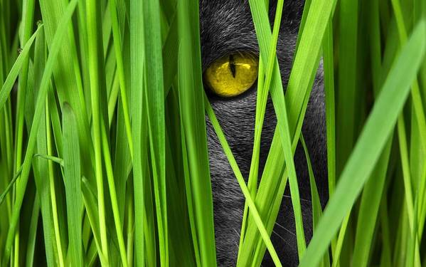 Cat Eye Grass View Lauer Position Cat Eyes - Art Print
