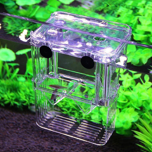 Aquarium Fish Tank High Clear Breeding Isolation Box Breeder Double Guppies
